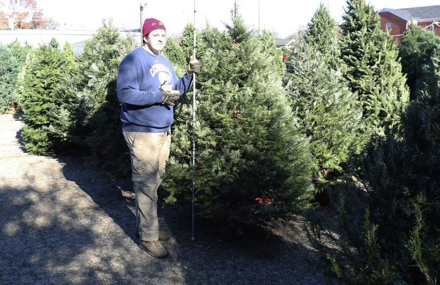 Senior James Cloud assists with the Christmas trees at Gore's Tree Farm in Broad Ripple.